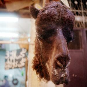 A Camel's Head Hangs In the Medina.